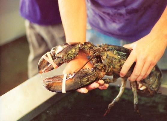 Lobster in Menemsha